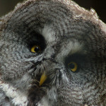 norwich counsellor- the owl